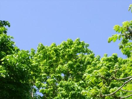 裏山にて2013年6月4日撮影