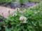 庭にて2013年6月23日撮影
