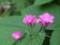 庭にて2013年7月6日撮影