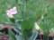 庭にて2013年8月31日撮影