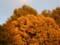 庭にて2013年10月22日撮影