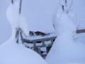 [小樽の風景]庭にて2013年12月30日撮影