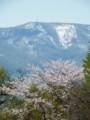 [小樽の風景]手宮緑化植物園にて2014年5月11日撮影