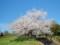手宮緑化植物園にて2014年5月11日撮影