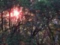[小樽の風景]庭にて2014年6月2日撮影