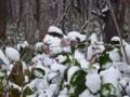 [小樽の風景]庭で2014年11月14日撮影