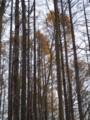 [小樽の風景]裏山で2014年11月14日撮影