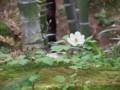 [姫路・京都の旅]天龍寺2015年4月23日撮影