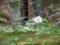 天龍寺2015年4月23日撮影
