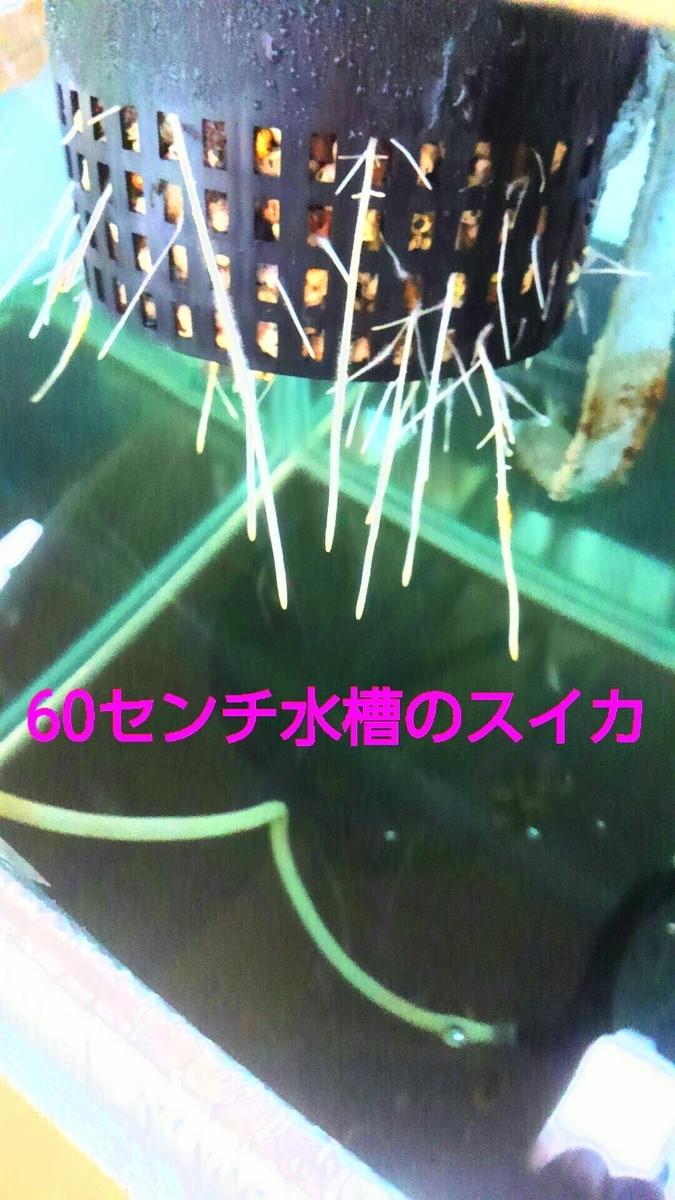 f:id:sikinomori117:20190426071806j:plain