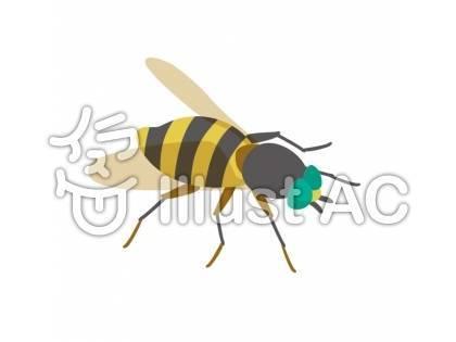 f:id:sikinomori117:20190730071906j:plain
