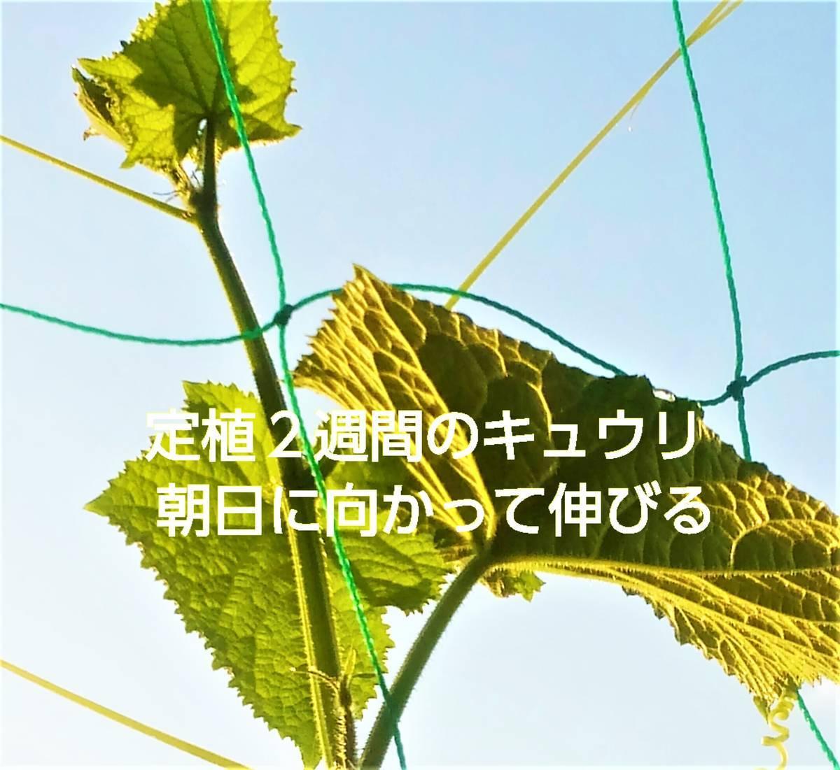 f:id:sikinomori117:20200620103302j:plain