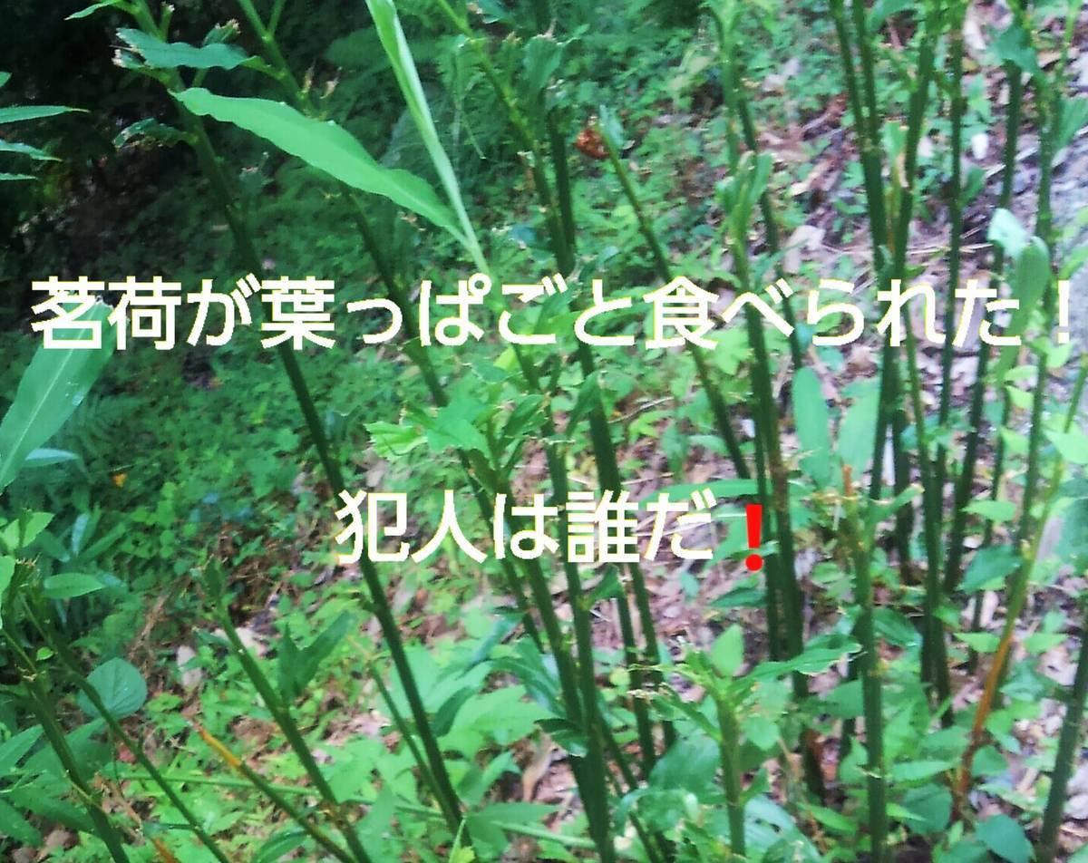f:id:sikinomori117:20200803155521j:plain