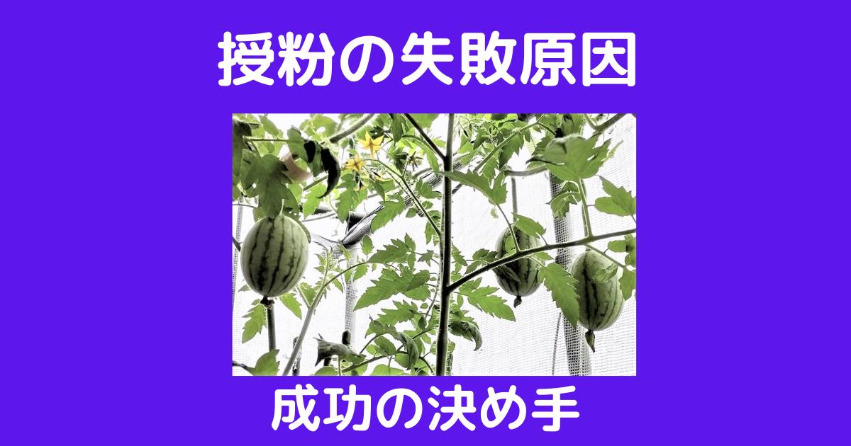 f:id:sikinomori117:20210614170611p:plain