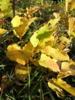 黄色く色づいた草