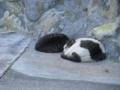 ゆでたまご作ってるとこで寝てる猫。あったかいんだろうね。