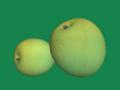 [果物]ゴールドキウイ
