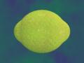 [果物]檸檬