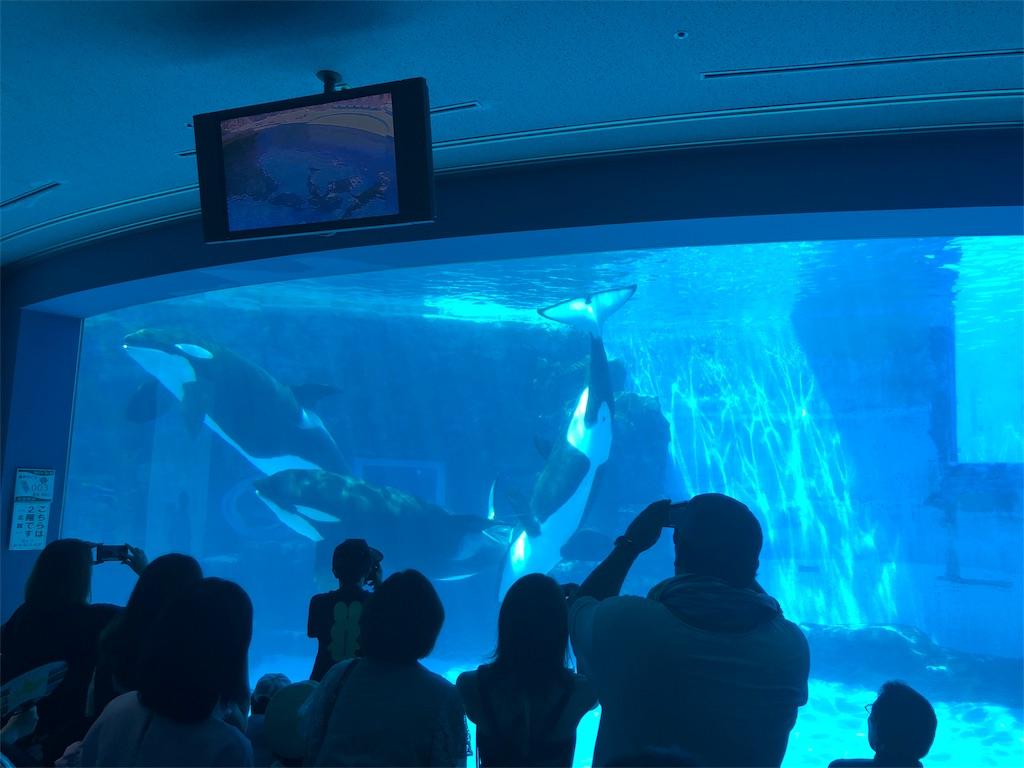 名古屋港水族館に行ってきた シャチやイルカやベルーガに感動 マイワシ