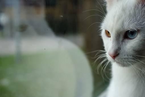 猫が見つめてる画像
