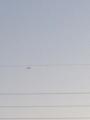 今日の飛行機曇り