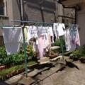 洗濯物20140613