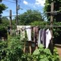 洗濯物2014061501