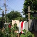 洗濯物20140620