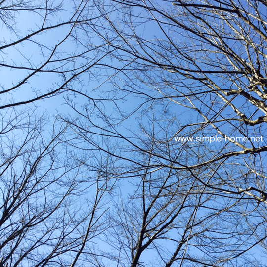 冬の空と木