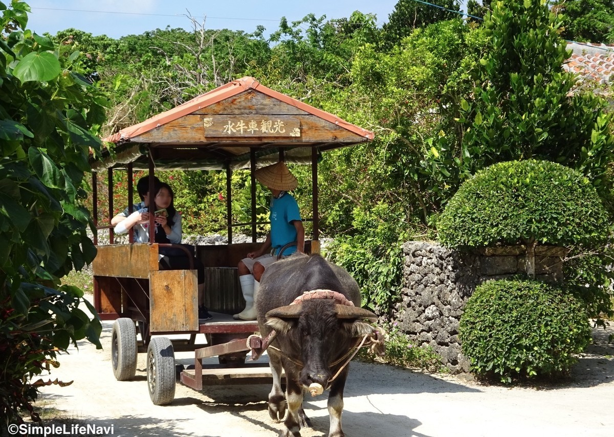 水牛車で観光