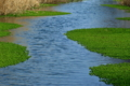京都新聞写真コンテスト 緑水面