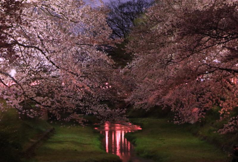 京都新聞写真コンテスト 玉川
