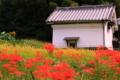 京都新聞写真コンテスト 彼岸