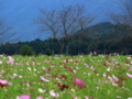 京都新聞写真コンテスト 野田園