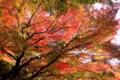 京都新聞写真コンテスト 百済寺