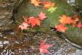 京都新聞写真コンテスト 水鉢