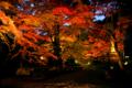 京都新聞写真コンテスト 夜紅葉