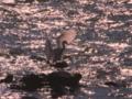 京都新聞写真コンテスト 飛翔