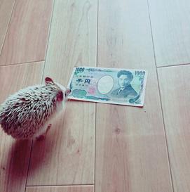 f:id:sinberu:20170125172625p:plain