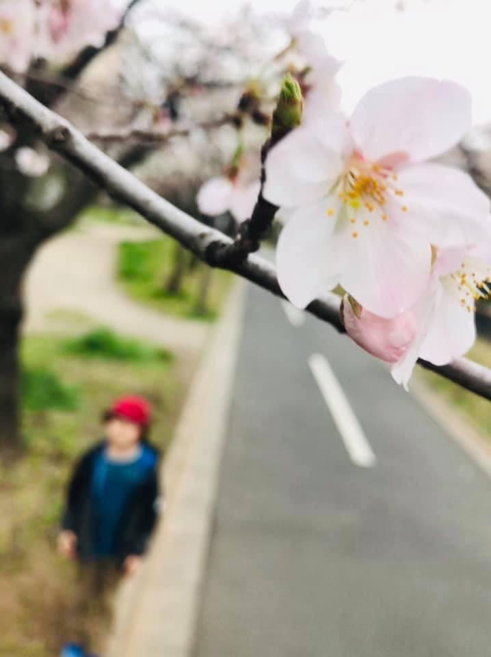 f:id:single-father-ajitama:20190326140803j:plain