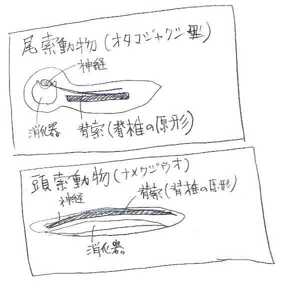 f:id:sinka-body:20180531152944j:plain