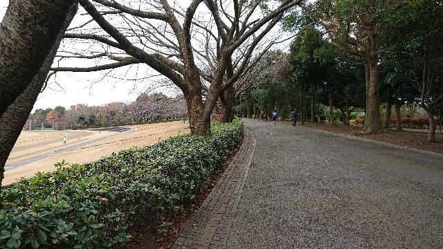 f:id:sinnosuke22:20181204073004j:image