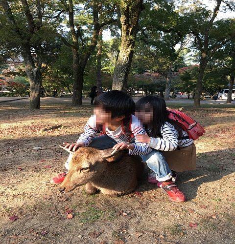 f:id:sinpapa-yusuke:20170909094034j:plain