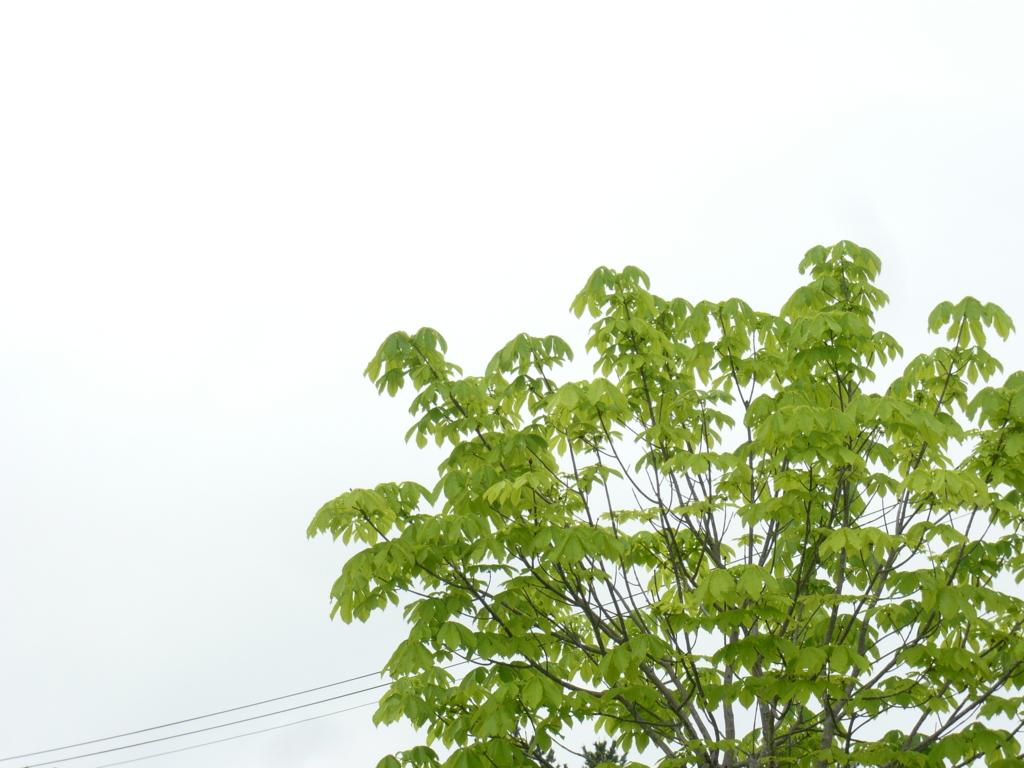 f:id:sinreiji:20170517210919j:plain