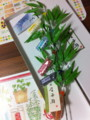 緑寿庵清水の七夕金平糖