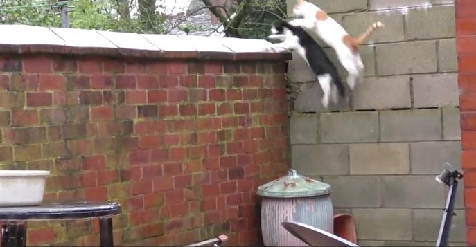 2匹の猫が同時にジャンプした結果3