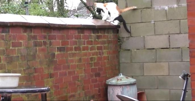 2匹の猫が同時にジャンプした結果4