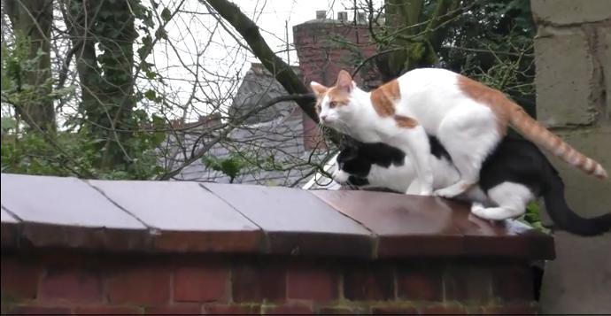 2匹の猫が同時にジャンプした結果5