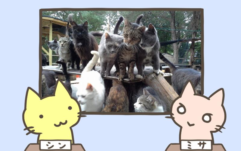 300匹の野良猫を保護する