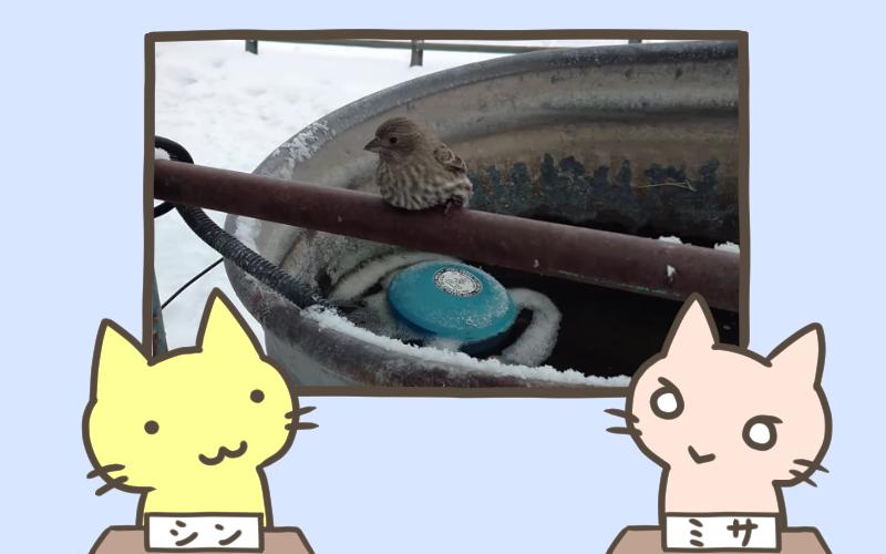 スズメの足が凍ったフェンスに張り付いちゃった